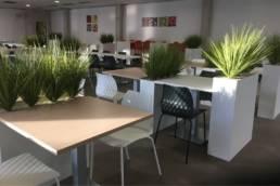 Mobilier de restauration d'entreprise green - plantes